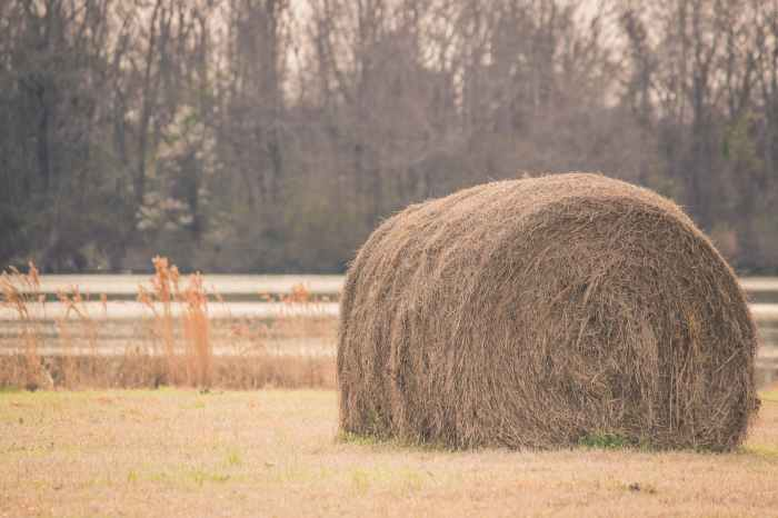 sepia tone photography of hay on field